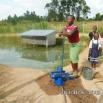 "Using the ""MoneyMaker"" treadle-operated water pumps supplied by KickStart"