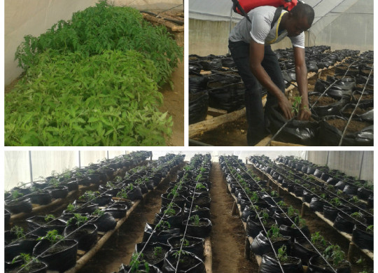 Can you help Vumilia grow food for its future?